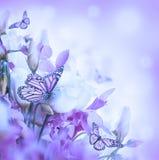Mazzo delle rose bianche e rosa, farfalla Fotografia Stock Libera da Diritti