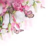Mazzo delle rose bianche e rosa, farfalla Immagine Stock