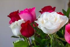 Mazzo delle rose bianche, rosse e rosa prese dal lato con basso-profondità o campo e spazio triangolare della copia Immagini Stock