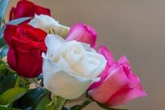 Mazzo delle rose bianche, rosse e rosa prese dal lato con basso-profondità o campo e spazio triangolare della copia Immagine Stock Libera da Diritti