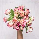Mazzo delle rose di arbusto rosa nella mano della vista superiore del fondo rustico di legno del regalo della ragazza l'8 marzo immagine stock