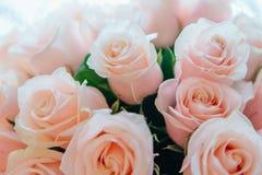 Mazzo delle rose di tè Fotografia Stock Libera da Diritti