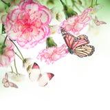 Mazzo delle rose e della farfalla rosa Immagine Stock