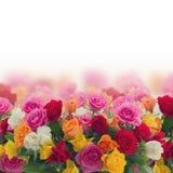 Mazzo delle rose fresche Immagine Stock Libera da Diritti