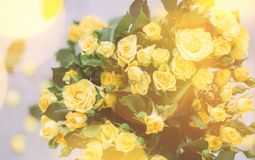 """mazzo delle rose gialle al sole - primavera, madre \ """"giorno di s e concetto di festa fotografia stock"""