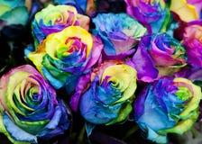 Mazzo delle rose multicolori Fotografia Stock Libera da Diritti