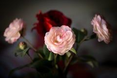 Mazzo delle rose rosa e rosse dei fiori, del tessuto su un fondo scuro Fotografia Stock