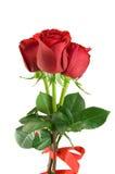 Mazzo delle rose rosse Fotografia Stock Libera da Diritti