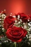 Mazzo delle rose rosse. fotografie stock libere da diritti