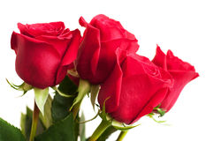 Mazzo delle rose rosse Fotografia Stock