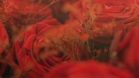 Mazzo delle rose rosse - decorazione di nozze video d archivio