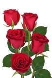 Mazzo delle rose rosse isolate fotografia stock libera da diritti