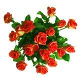 Mazzo delle rose rosse isolate su priorità bassa bianca Immagine Stock