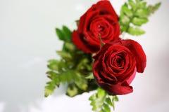 Mazzo delle rose rosse su un fondo bianco Immagine Stock