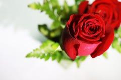 Mazzo delle rose rosse su un fondo bianco Fotografia Stock