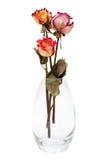 Mazzo delle rose secche Fotografia Stock