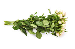 Mazzo delle rose sopra fondo isolato bianco Immagini Stock Libere da Diritti