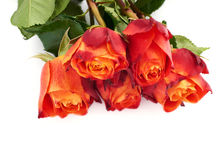 Mazzo delle rose sopra fondo isolato bianco Immagini Stock