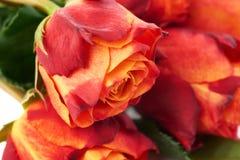 Mazzo delle rose sopra fondo isolato bianco Fotografia Stock Libera da Diritti