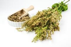 Mazzo di acetosa fresca e di acetosa secca in una ciotola Fotografie Stock