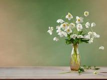 Mazzo di Adone bianco in un vaso di vetro Immagine Stock