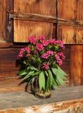 Mazzo di Alpenrosen Fotografie Stock Libere da Diritti