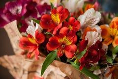 Mazzo di alstroemeria dei fiori Fotografie Stock