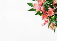 Mazzo di alstroemeria dei fiori su fondo bianco con lo PS della copia Immagine Stock Libera da Diritti