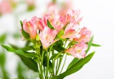 Mazzo di alstroemeria rosa Immagine Stock Libera da Diritti