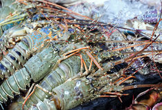 Mazzo di aragosta fresca Fotografia Stock Libera da Diritti