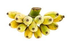 Mazzo di banana coltivata Immagini Stock