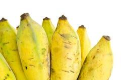Mazzo di banana coltivata Immagini Stock Libere da Diritti