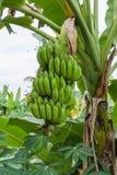 Banana immagine stock