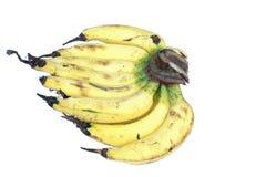 Mazzo di banane dolci isolate su fondo bianco Fotografia Stock Libera da Diritti