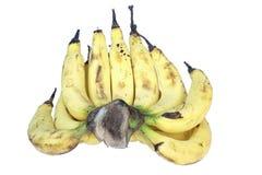 Mazzo di banane dolci isolate su fondo bianco Fotografie Stock