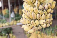 Mazzo di banane mature nel mercato Immagini Stock Libere da Diritti