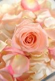 Mazzo di bei fiori Fotografie Stock Libere da Diritti