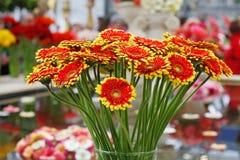Mazzo di belle gerbere rosso-gialle in un vaso Fotografie Stock Libere da Diritti