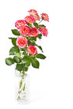 Mazzo di belle rose. immagini stock