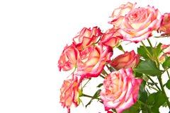 Mazzo di belle rose. fotografia stock