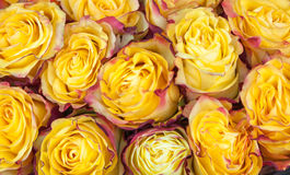 Mazzo di belle rose moderne gialle e rosa Fotografia Stock