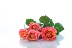 Mazzo di belle rose rosa isolate su bianco fotografia stock libera da diritti