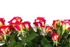 Mazzo di belle rose rosse su un fondo bianco Fotografia Stock Libera da Diritti