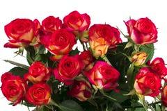 Mazzo di belle rose rosse su un fondo bianco Immagini Stock