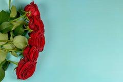 Mazzo di belle rose rosse su un fondo blu Fotografia Stock Libera da Diritti