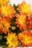 mazzo di bello, crisantemo arancione Immagini Stock