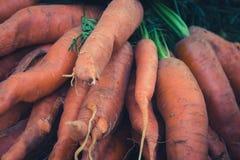 Mazzo di bio- primo piano delle carote, crudo e non lavato fotografia stock libera da diritti