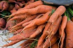 Mazzo di bio- primo piano delle carote, crudo e non lavato immagini stock libere da diritti