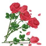Mazzo di caduta delle rose rosse Immagini Stock Libere da Diritti