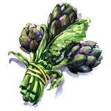 Mazzo di carciofi porpora freschi con il gambo e la foglia, verdura isolata, illustrazione disegnata a mano dell'acquerello su bi illustrazione di stock